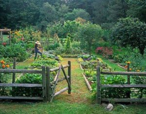 Grow your own food as you restore ecology