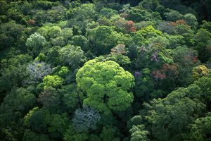 Old-growth forests must be protected and restored to limit abrupt climate change