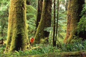 Old-growth forests filled with large, old trres, are holy and worthy of veneration, literally the givers of life