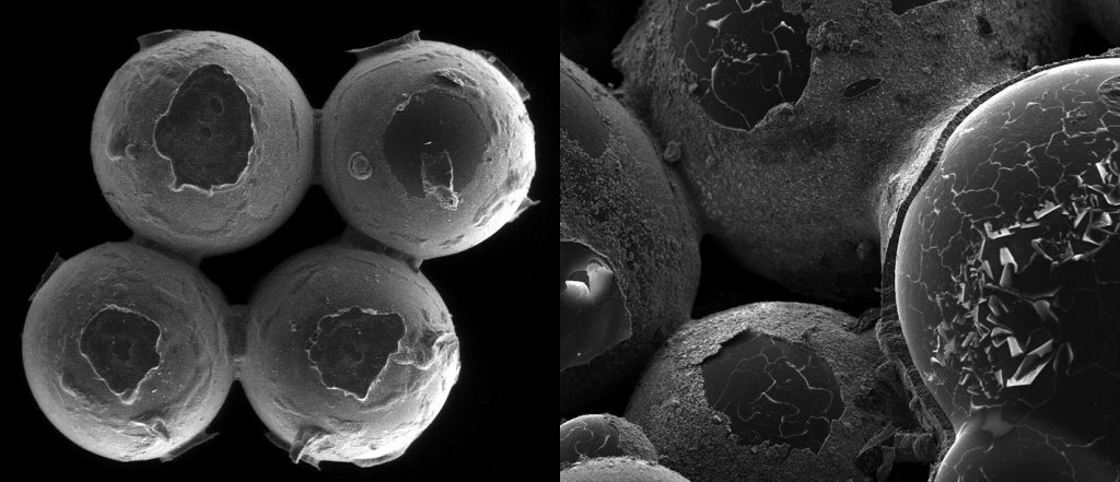 Left: Glass beads (1 millimeter in diameter) covered by bioMASON bacteria (imperceptible at this magnification) and stitched together by biocement. Right: Magnified version of left reveals biocement as it coats glass beads. Photo courtesy of Ginger Krieg Dosier/bioMASON