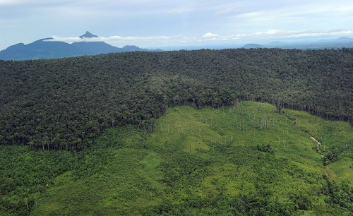 Receding forest on a mountainside in West Kalimantan province in Borneo