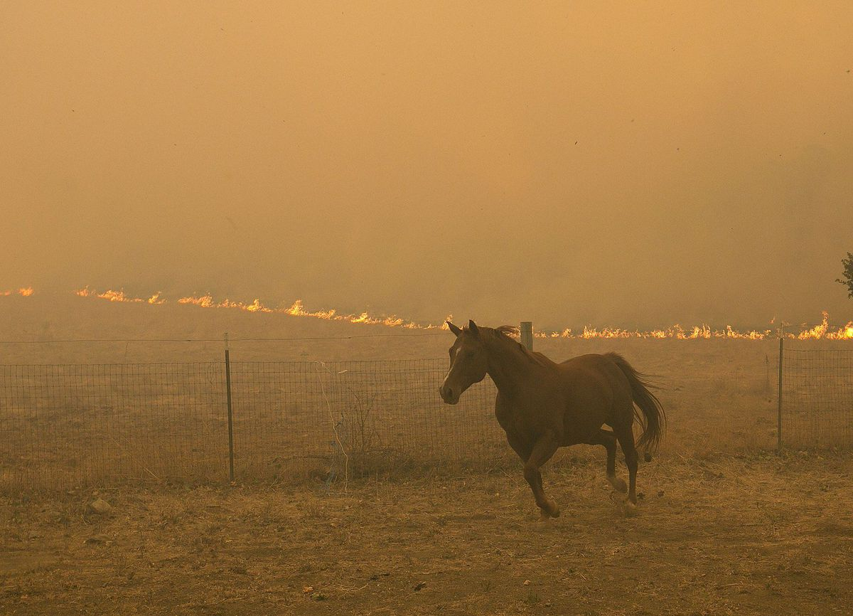 A horse runs from the flames from a massive wildfire, in Napa, Calif. on Oct. 9, 2017.