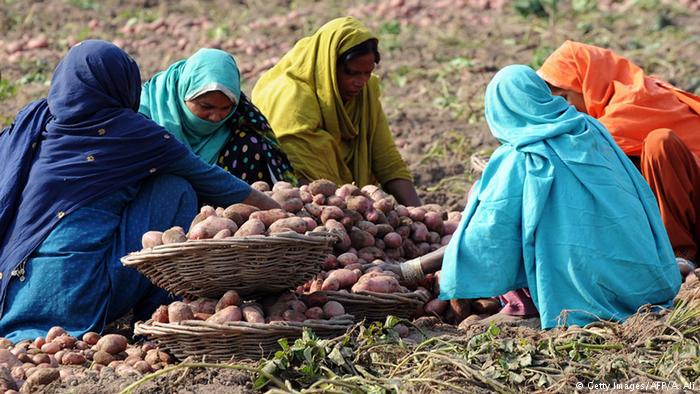 Pakistani women work in a potato field in Lahore (Getty Images/AFP/A. Ali)