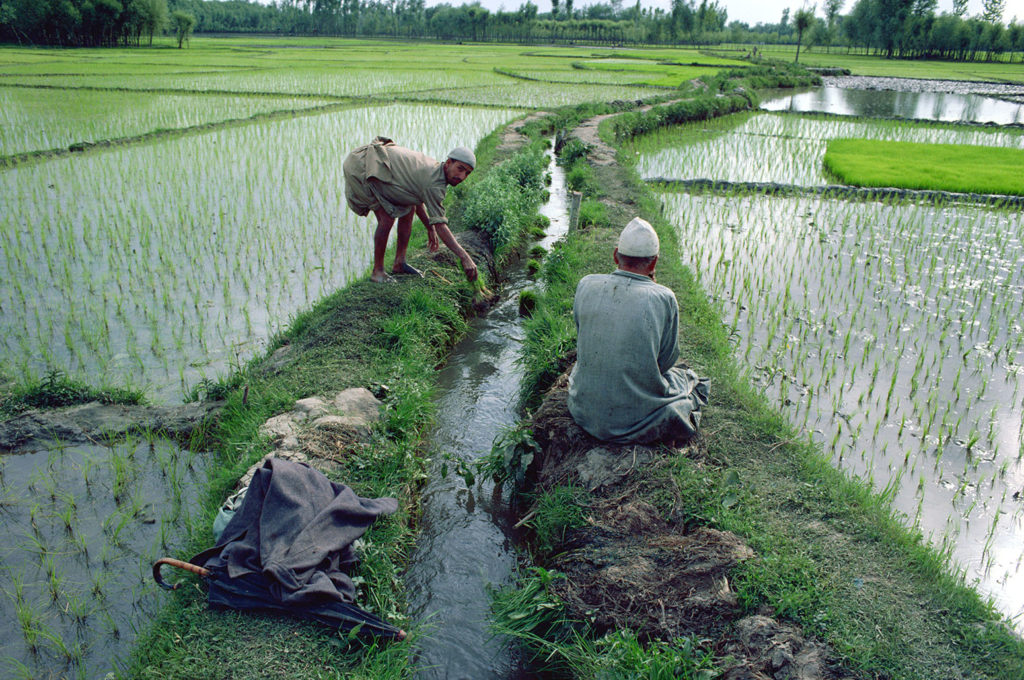 Workers in rice paddy fields, Kashmir, India. Credit: robertharding / Alamy Stock Photo. B5A3T8