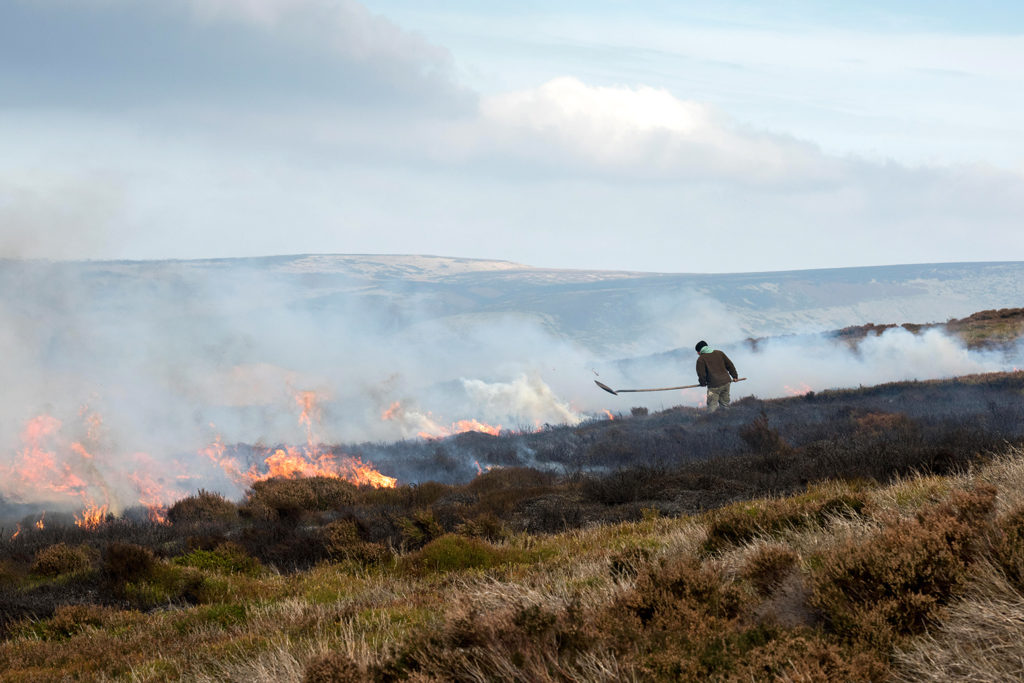 Grouse moor management by heather burning, Peak District National Park, UK. Credit: Christian Heintzen / Alamy Stock Photo. 2A7G58J