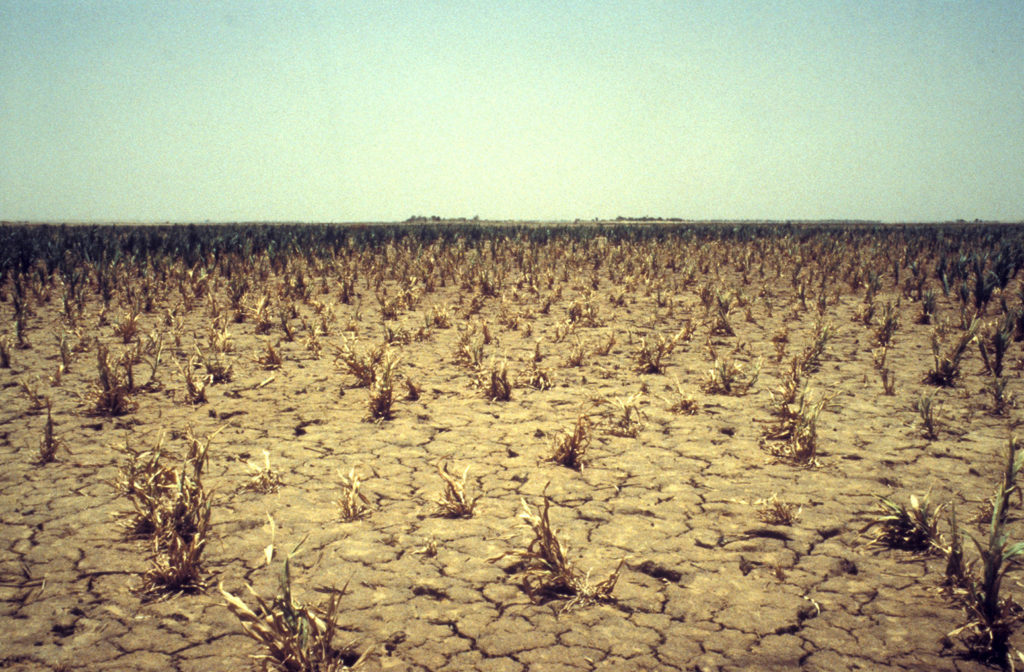 Drought in the Sahel region of Mali, between 1984-85. Credit: frans lemmens / Alamy Stock Photo. AEFD7P