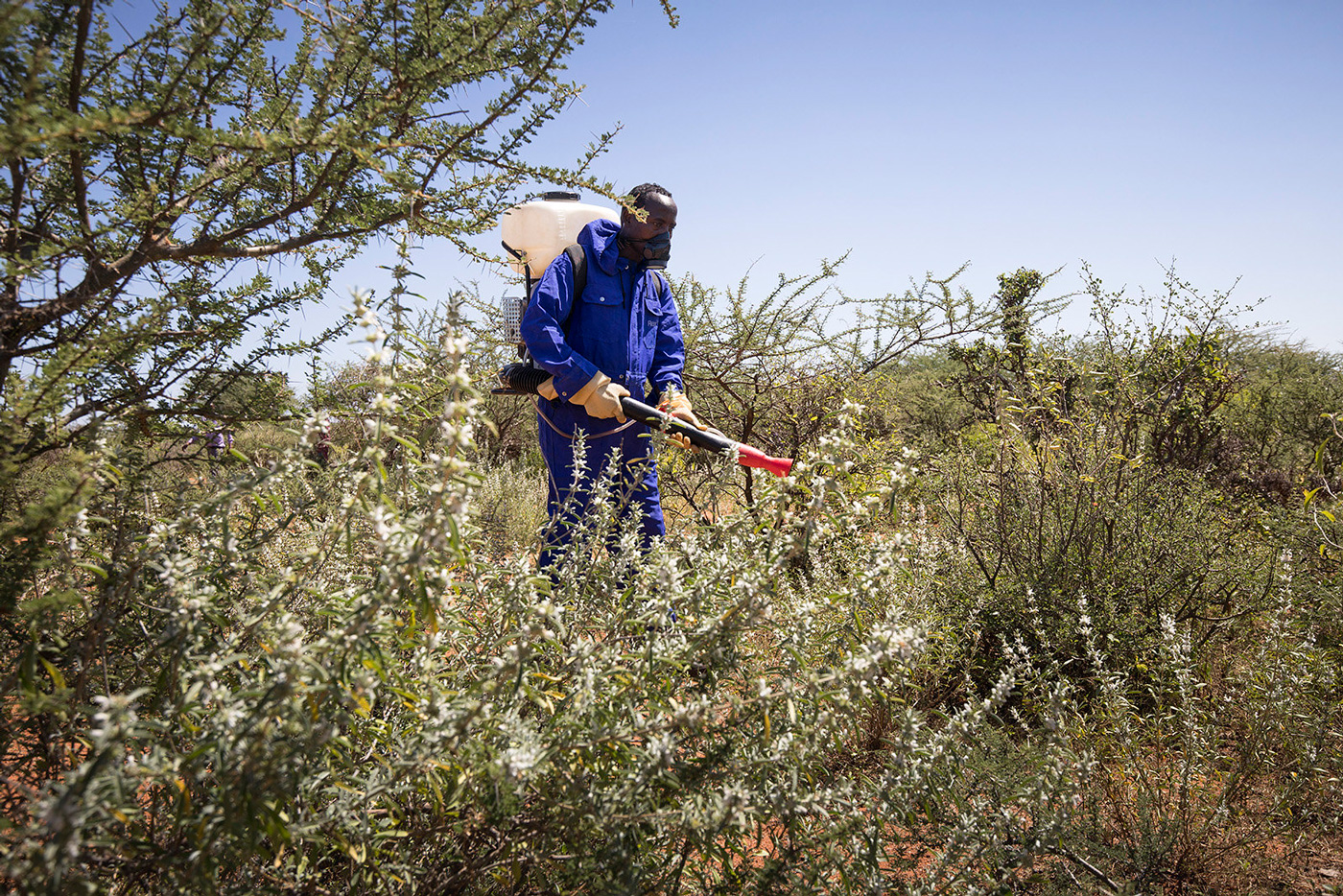 A government staff member of the Ethiopian ministry of Agriculture spraying against locusts in the Somali region of Ethiopia. Credit: FAO/Petterik Wiggers