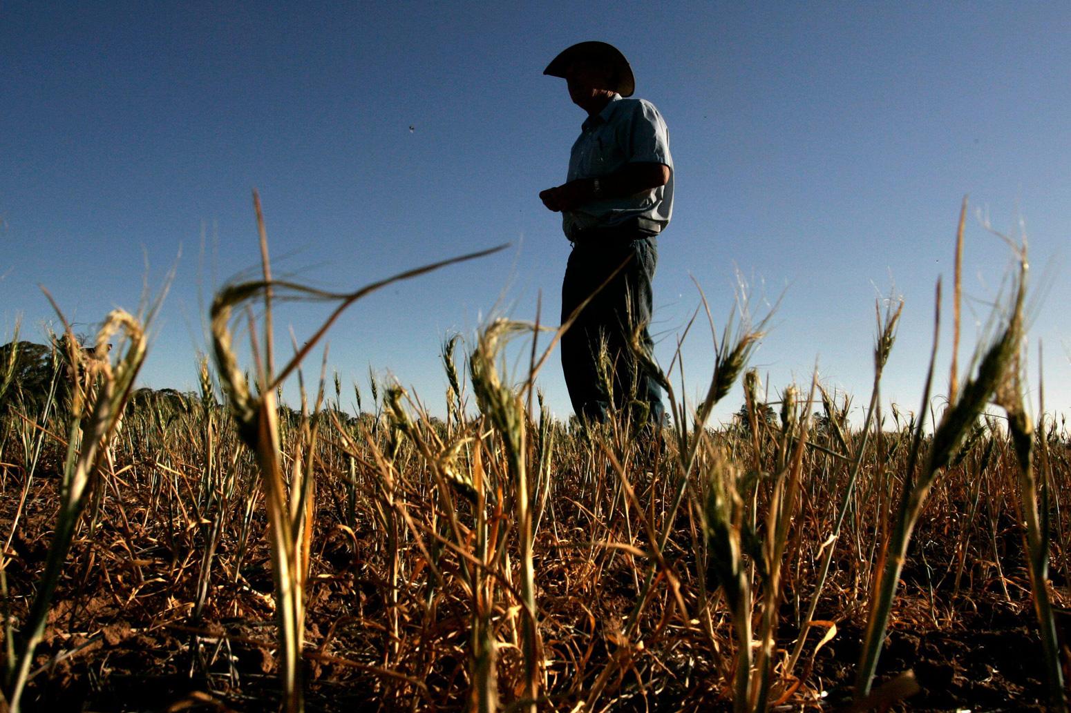 Farmer-stands-over-his-failed-wheat-crop-on-his-farm-near-the-town-of-West-Wyalong-Australia
