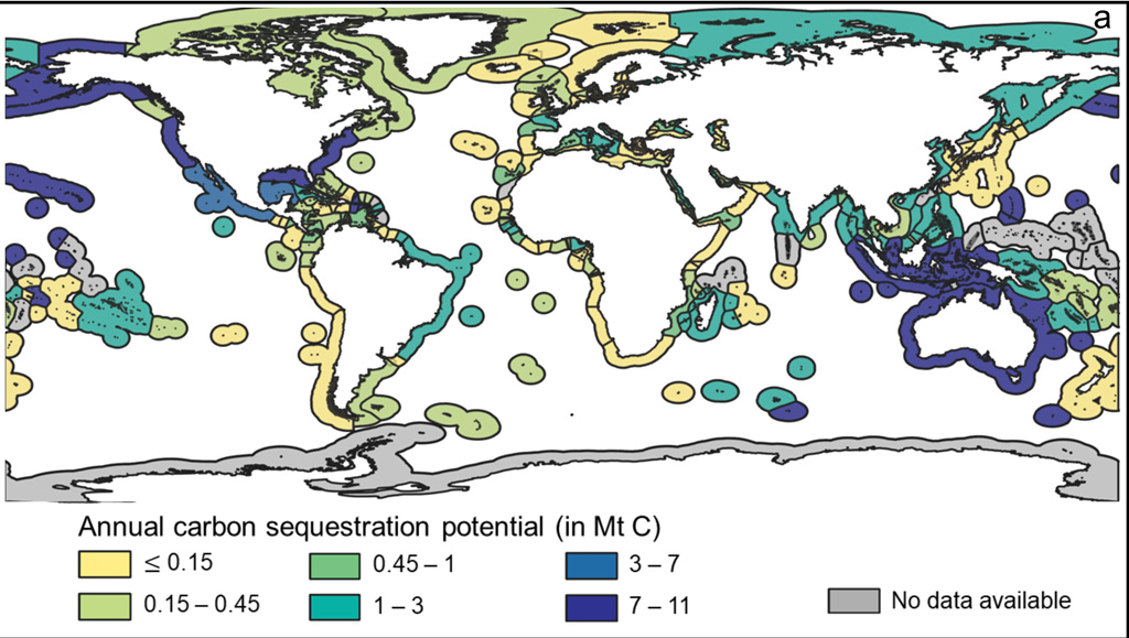 Global map of average annual blue-carbon sequestration potentials by country.