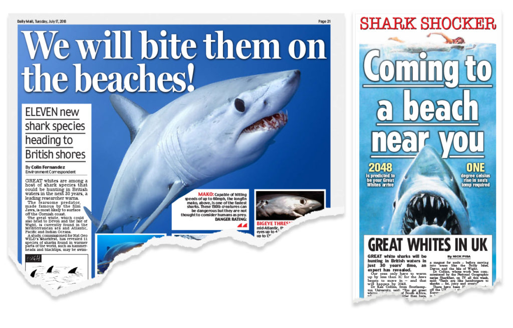 Factcheck: Will climate change bring great white sharks to