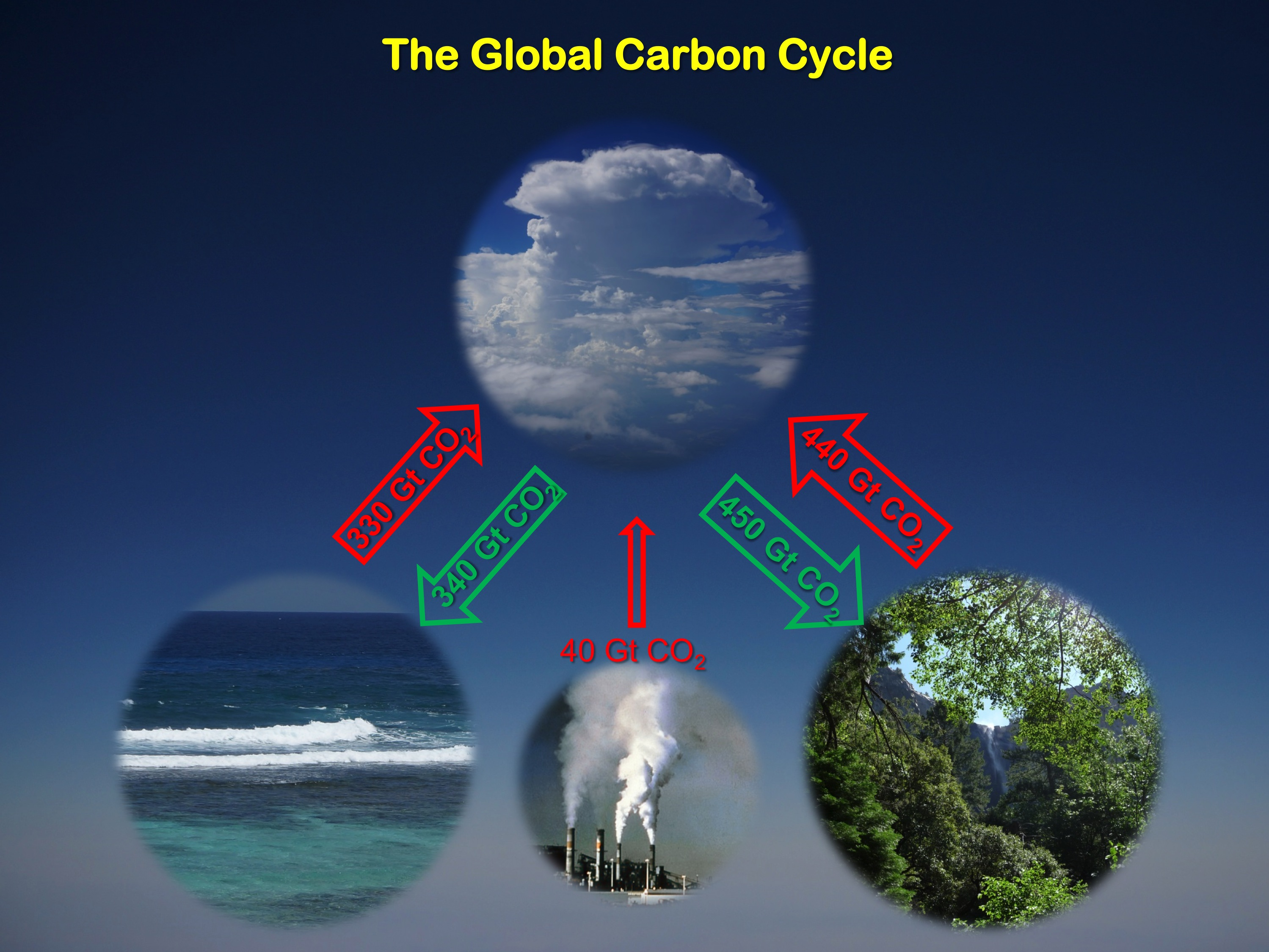 The ocean and land have continued to, over time, absorb about half of all carbon dioxide emissions.