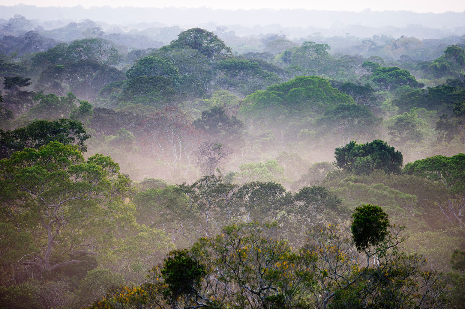 View across canopy of Amazon rainforest with mist at dawn. Credit: David Tipling Photo Library / Alamy Stock Photo. C8XHJF