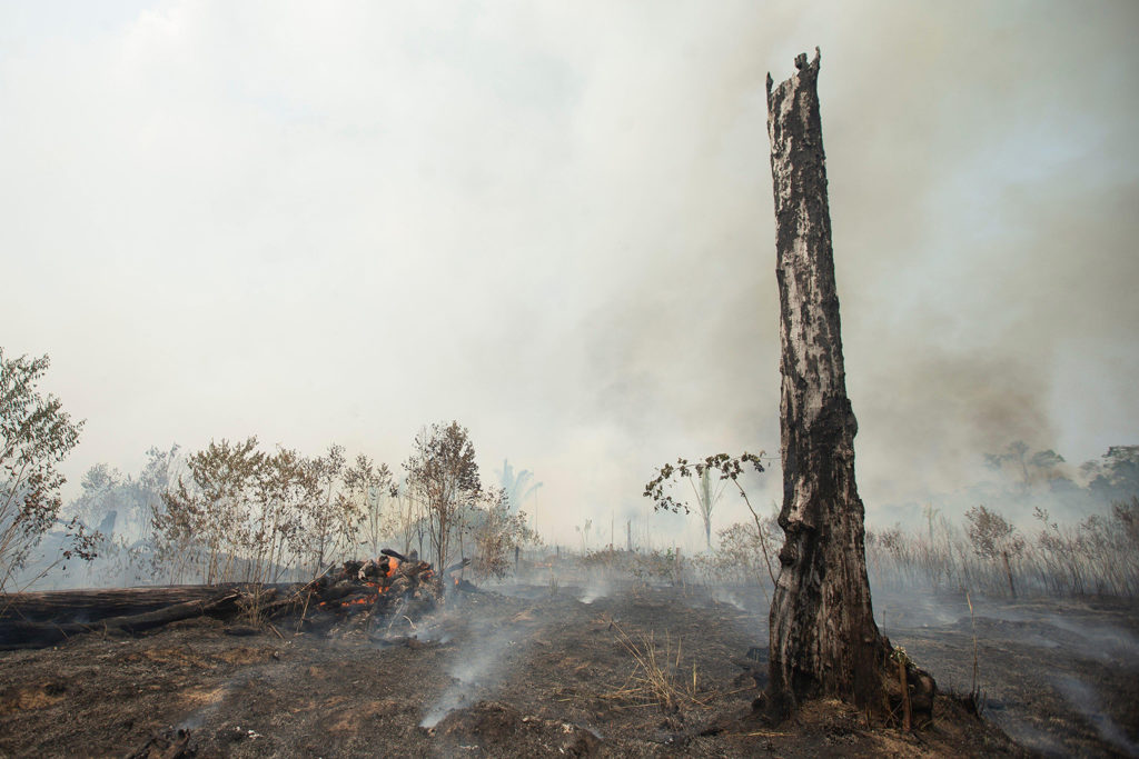 Amazon wildfires in Rondonia, Brazil, 24 August 2019. Credit: EFE News Agency / Alamy Stock Photo. WB5D4Y