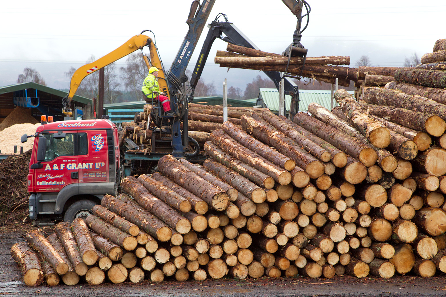 Processing spruce tree trunks at a sawmill, Inverness-shire, Scotland, UK. Credit: Nature Picture Library / Alamy Stock Photo. W7MRYN