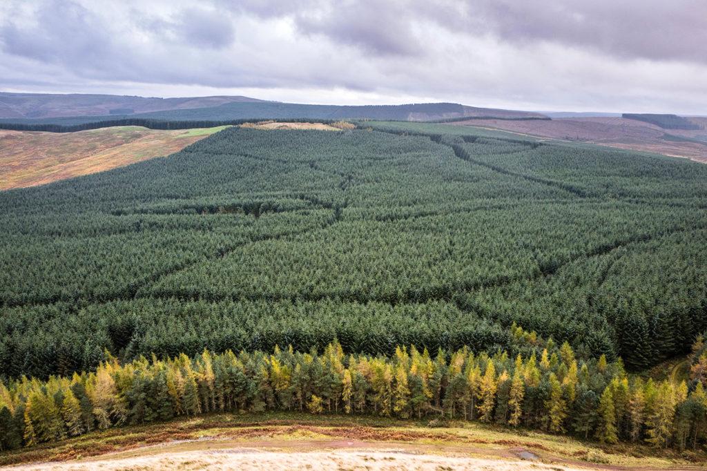 Leithope Forest, Scottish Borders. Credit: Chris Strickland / Alamy Stock Photo. H6KRNT
