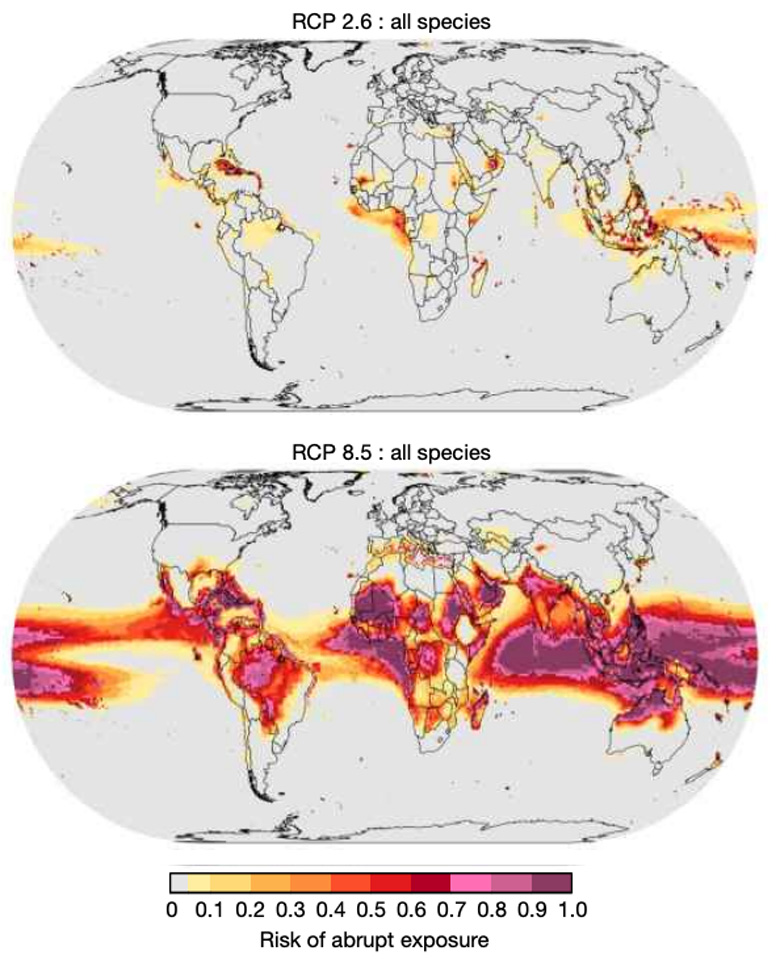 Risk of abrupt exposure of ecosystems to intolerable temperatures under RCP2.6 (top) and RCP8.5 (bottom). Risk is defined as the proportion of the 22 climate models used in the study that expect a given region to experience an abrupt exposure event by the end of the century. For example, a risk of 1.0 (dark purple) indicates that all the models expect that region to see an abrupt exposure event by the end of the century, while 0.0 (grey) indicates that none of the models expect there to be an exposure event. Source: Trisos et al. (2020)