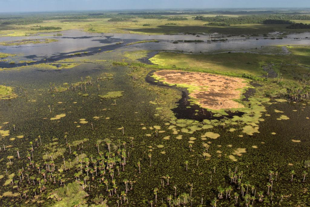 Wetlands of Abari Swamps, Mahaica Miconi Abari, Guyana South America. Credit:  Nature Picture Library / Alamy Stock Photo K2DA76