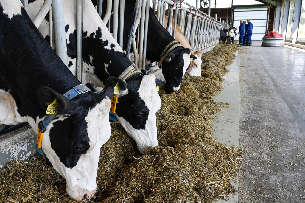 Dairy cow farm in Echem, Germany
